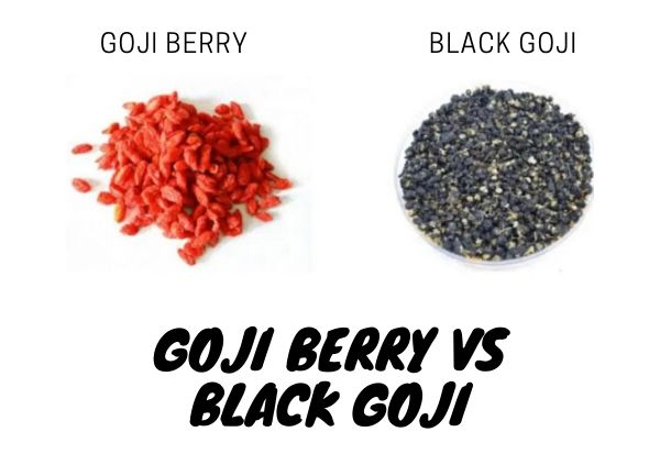What Is The Difference Between Black Wolfberry And Red Wolfberry